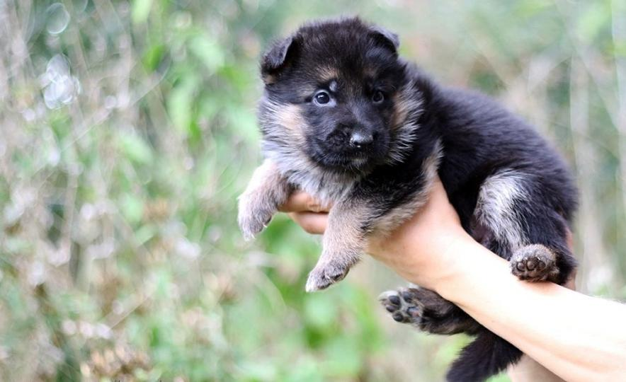 Немецкие клички щенку