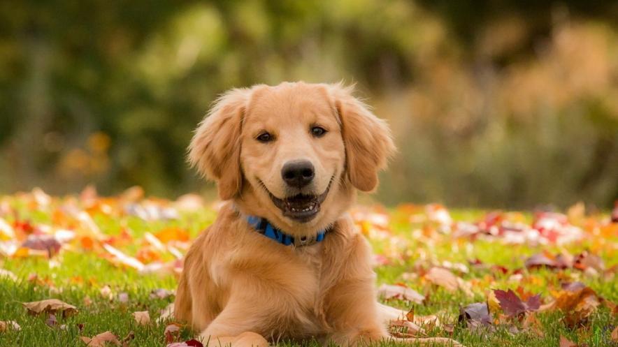 Русские клички собакам