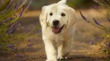 Легкие и красивые клички для собак
