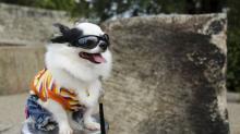 Модные клички для собак