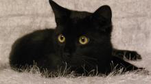 Клички для черных котов