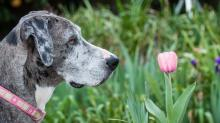 Растения, которые отпугивают собак и кошек