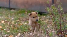 Казахские клички для собак