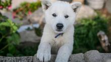 Корейские клички для собак