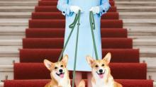 Королевские собаки Елизаветы II