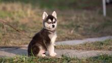 Популярные клички для собак мальчиков