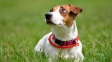 Майло - кличка собаки из фильма Маска