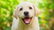 Смешные клички для собак