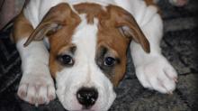 Клички для собак средних пород