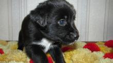 Имя Боня для собаки