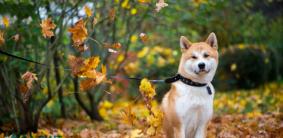 Имена для породистых собак