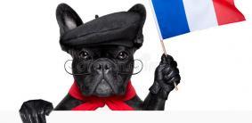 Французские клички для собак
