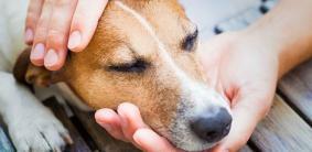 Топ 10 советов, как избавиться от аллергии на собаку