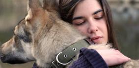 Фильмы про немецких овчарок