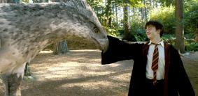 Клички и имена животных и персонажей в Гарри Поттере