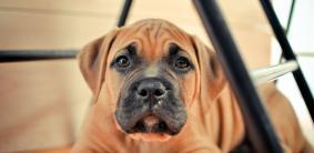 Королевские клички для собак