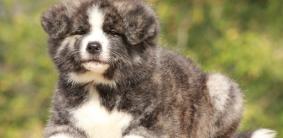Еврейские клички для собак