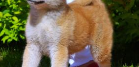 Красивые клички для собак мальчиков