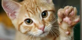 Модные, стильные и яркие клички котов и кошек