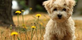 Собаки-долгожители: топ-10 пород