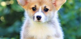 Имена для умных собак